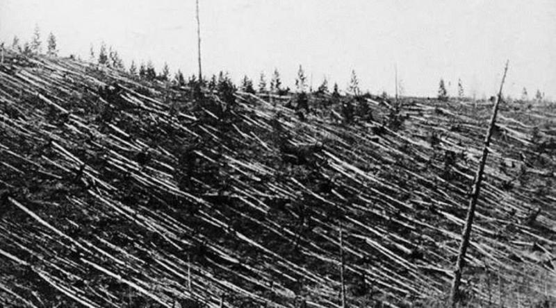 toungouska-arbres.jpg