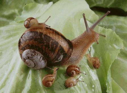 EscargotsPetits