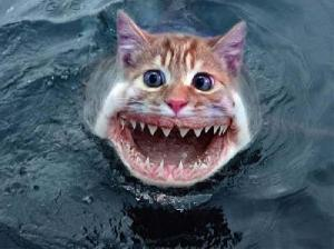 poisson-chat-fun