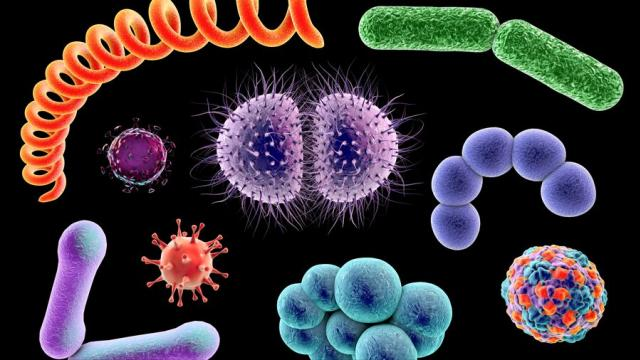 des-bacteries-vieilles-de-15-millions-dannees-dans-nos-intestins.jpg