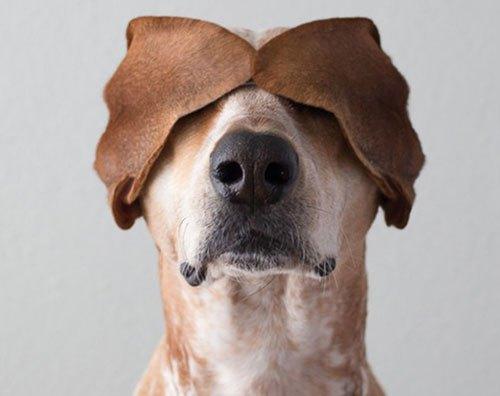 dog-maddie