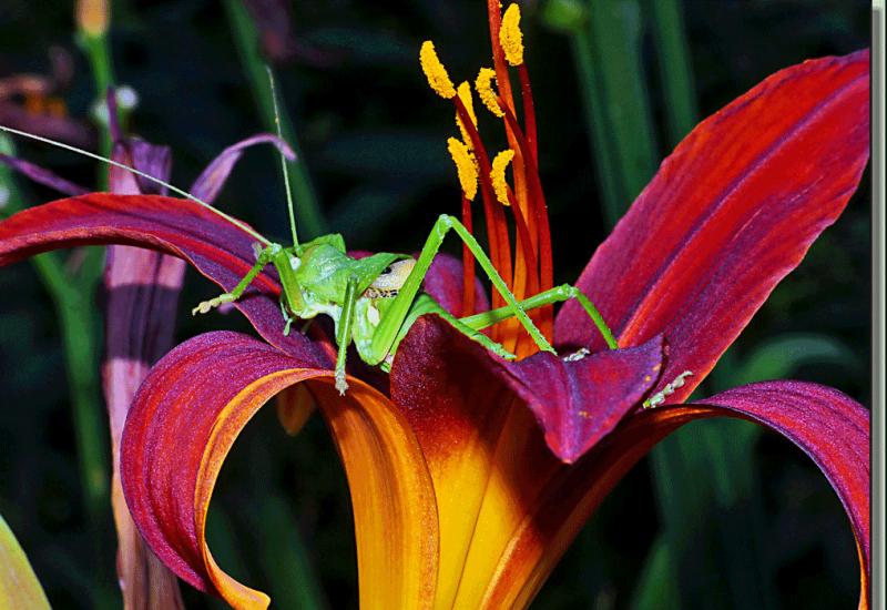 Flore-mutante