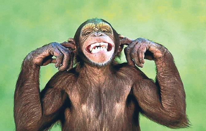 maymunlar-arkadaslik-icin-guluyor-1179035