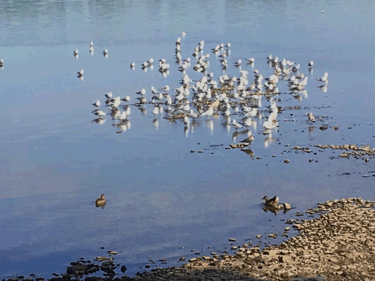 RDP-Oiseaux.png