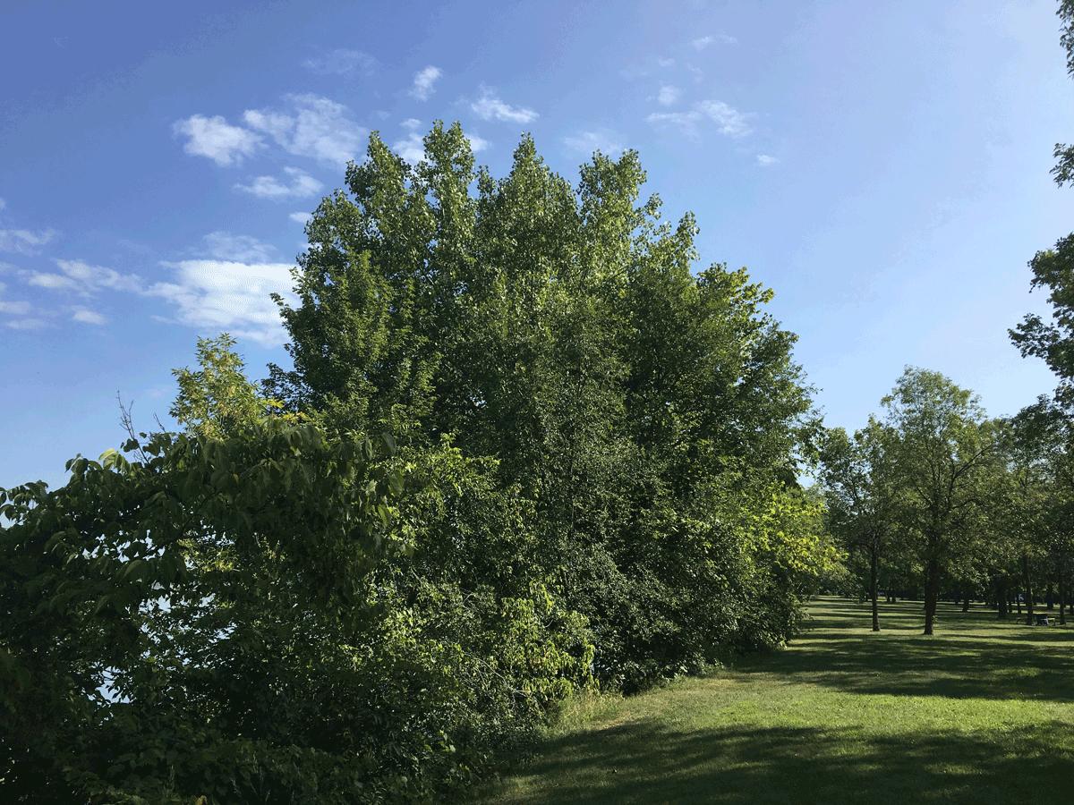 RDP-Parc