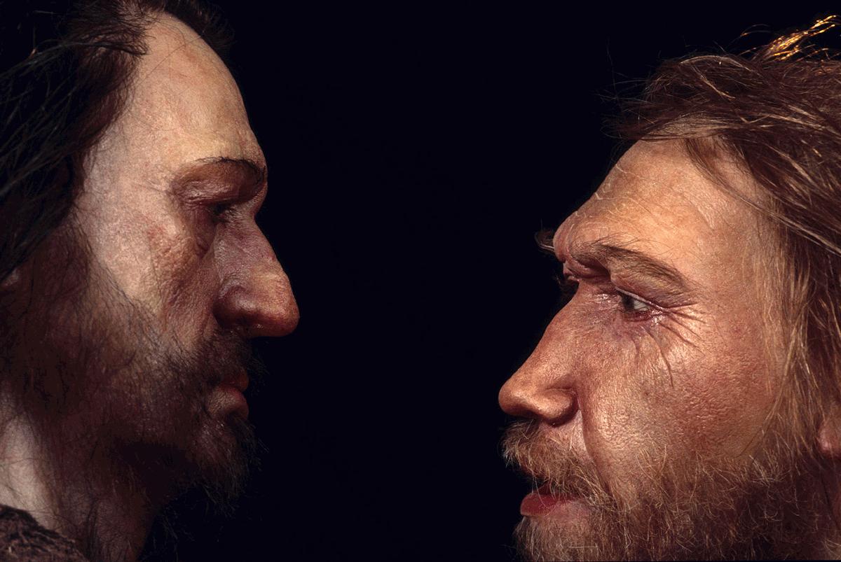 Sapiens-neanderthal