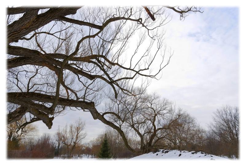 les-arbres-aux-cent-courbures__007