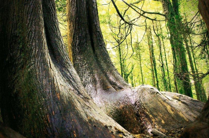 vers-fin-des-grands-arbres.jpg